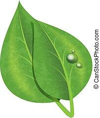 bladeren, druppels, groene, vrijstaand, dauw