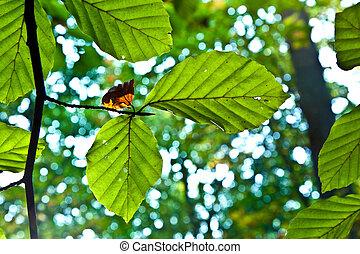 bladeren, eik, harmonie