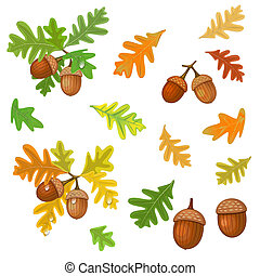 bladeren, eikeltjes