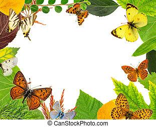 bladeren, en, vlinder
