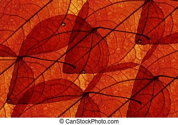 bladeren, esdoorn, achtergrond
