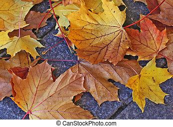 bladeren, gevallen, herfstachtig