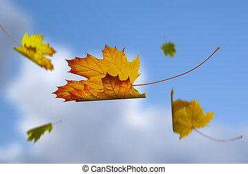 bladeren, gevallen, in, de, hemel