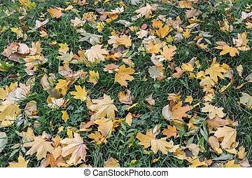 bladeren, gras, groene, gele