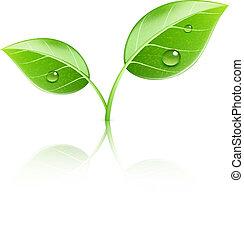 bladeren, groene, glanzend