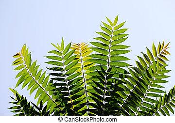 bladeren, groene, tak