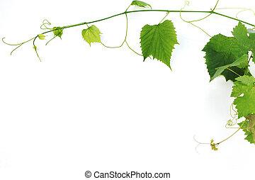 bladeren, groene, wijntje
