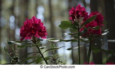bladeren, groene, wind, bloemen, zwiepen, rood