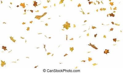 bladeren, het vallen
