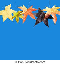 bladeren, in, blauwe