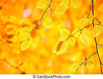 bladeren, in, herfst bos