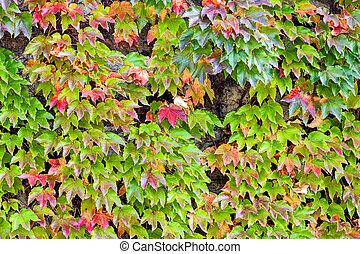bladeren, in het park