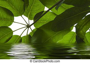 bladeren, in het water