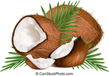 bladeren, kokosnoten, slice.