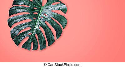 bladeren, minimaal, achtergrondkleur, coraal, zomer, ...