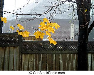 bladeren, mist, esdoorn