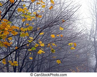 bladeren, mist, leest, esdoorn