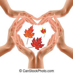bladeren, omringde, white., handen