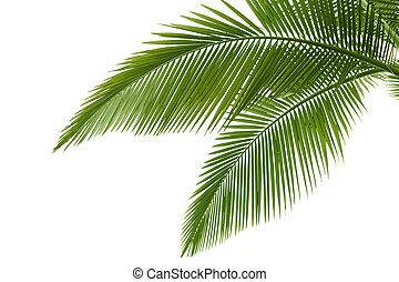 bladeren, palm