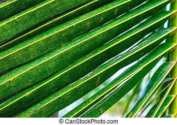 bladeren, palm, tak