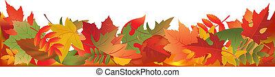bladeren, panorama, herfst