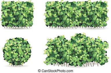 bladeren, set, groene struiken