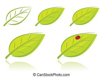 bladeren, set, vector, groene