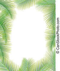 bladeren, van, palmboom, op wit