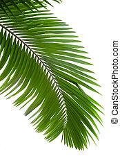 bladeren, van, palmboom