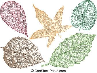 bladeren, vector, herfst