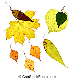 bladeren, vrijstaand, gele achtergrond, witte , gevallen