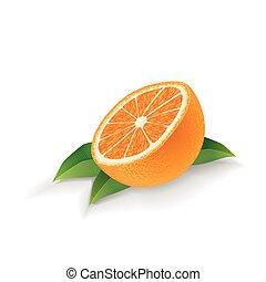 bladeren, vrijstaand, vector, achtergrond, sinaasappel, witte