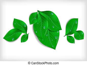 bladeren, waterdrops, groene