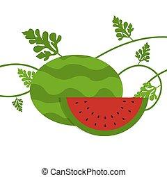 bladeren, watermeloen