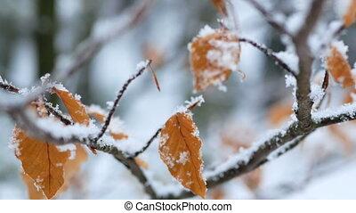 bladeren, winter, sneeuw, bevroren