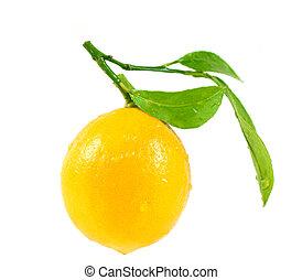 bladeren, witte , citroen, vrijstaand, achtergrond