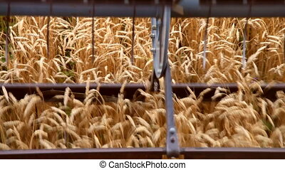 Blades combine harvester cut wheat-ears in the field,...