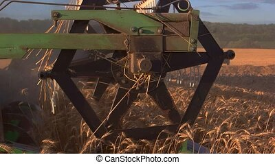 Blades of combine cutting ears.