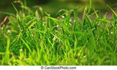 Blades of wild grass fluttering pan shot in slow motion
