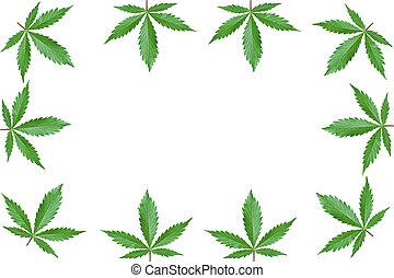 bladpatroon, marihuana, ruimte, cannabis, bladeren, decoratief, achtergrond, vrijstaand, kopie, groene, frame, pattern., witte