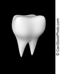 blanc, 2, racines, dent