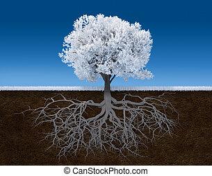 blanc, arbre