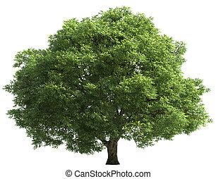 blanc, arbre, isolé