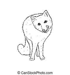 blanc, arctique, sketch., dessin, main, noir, contour, fox., arrière-plan., illustration, polaire, vecteur