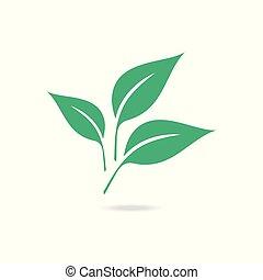 blanc, arrière-plan., isolé, feuille verte