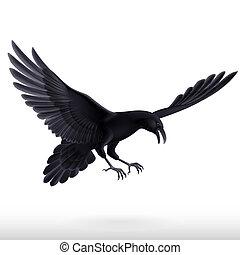 blanc, arrière-plan noir, corbeau