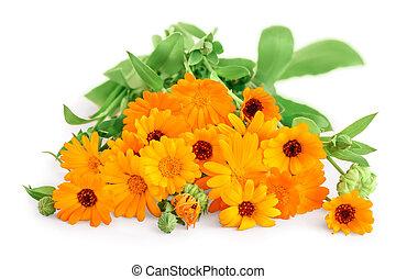 blanc, bouquet, isolé, calendula, fleurs oranges, fond