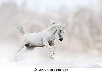 blanc, Cheval, hiver