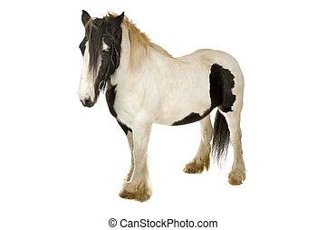 blanc, cheval noir