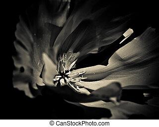 blanc), fleur, romantique, fond, (black
